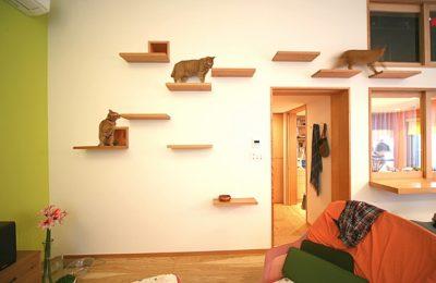 Apartamente pentru pisici