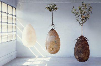 Urna biodegradabilă