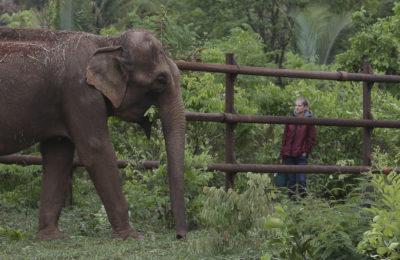 global-sanctuary-for-elephants