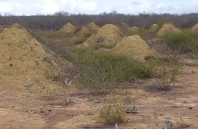 megalopolis al termitelor