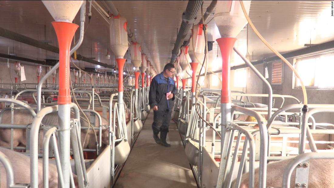 porcii din China